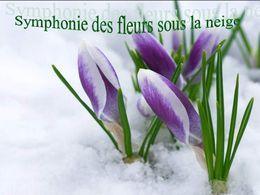 Symphonie des fleurs sous la neige