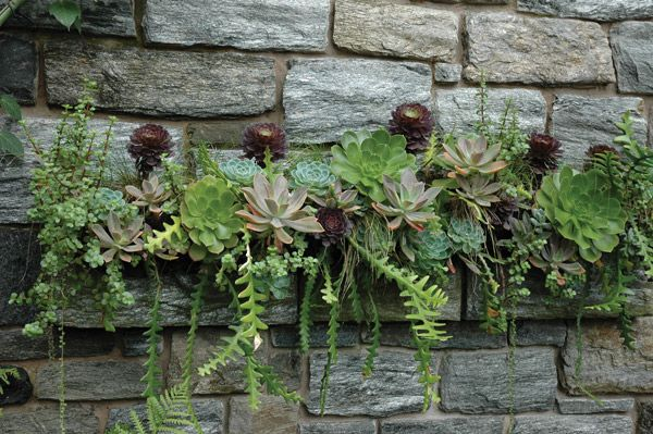These juicy succulents with their bold foliage, along with cactus, beautifully complement the stone mantel they are growing on, thriving in ...