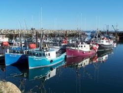 fishboats in Meteghan harbour