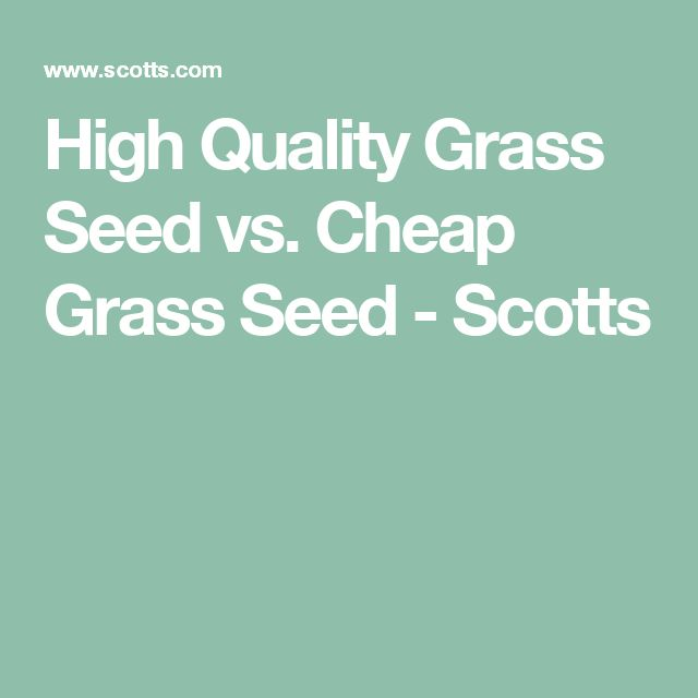 High Quality Grass Seed vs. Cheap Grass Seed - Scotts
