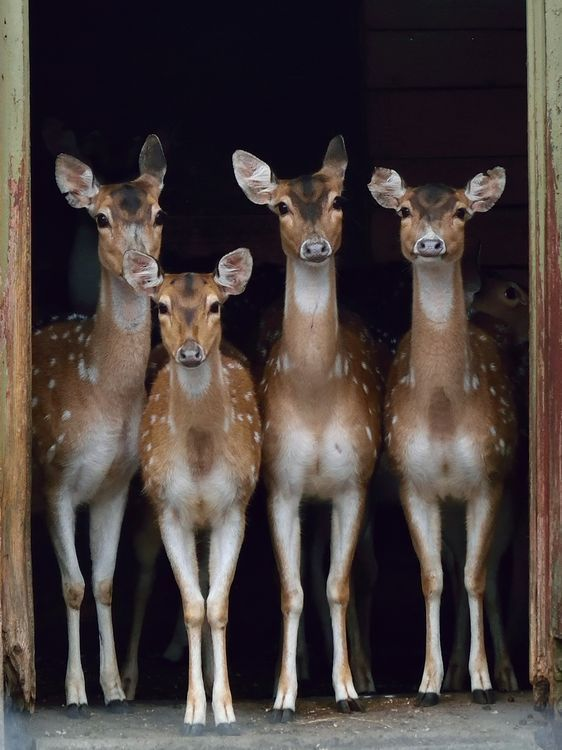 Deer photo by Kristiina Tompel | Daily Dozen for July 25, 2016 — Photos -- National Geographic Your Shot