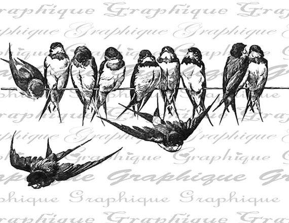 birds-digital download