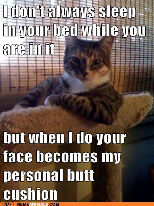 haha...so true: Funny Cat, I Don'T Always, Interestingcat, Funnycat, Funny Stuff, So True, Interesting Cat, Animal Memes, Cat Memes