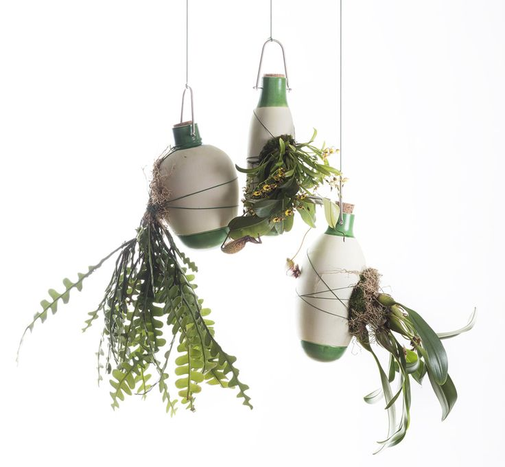 plants envelop dossofiorito's hanging epiphytes pots with their roots
