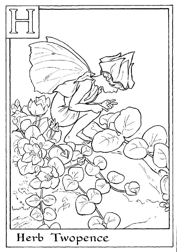 Letter H For Herb Twopence Flower Fairy Coloring Page