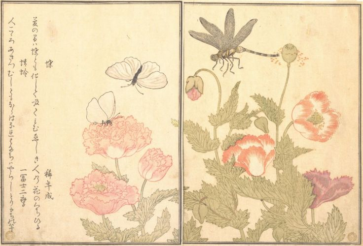 Butterfly and Dragonfly by Utamaro; from the Insect Book.