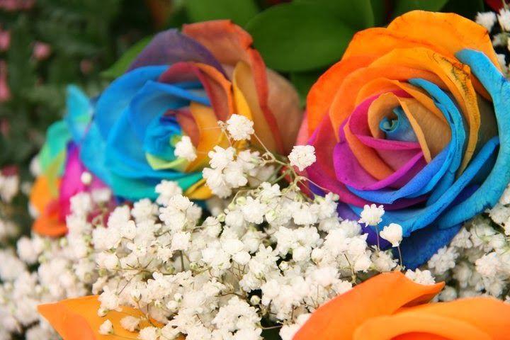Jual Bunga Valentine Mawar Holland dan Mawar Import | Toko Bunga by Florist Jakarta