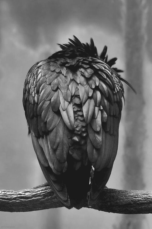 """Disgruntled Raven photo~ dirty-fairytale  """"Does wisdom perhaps appear on the earth as a raven which is inspired by the smell of carrion?"""" Friedrich Nietzsche"""