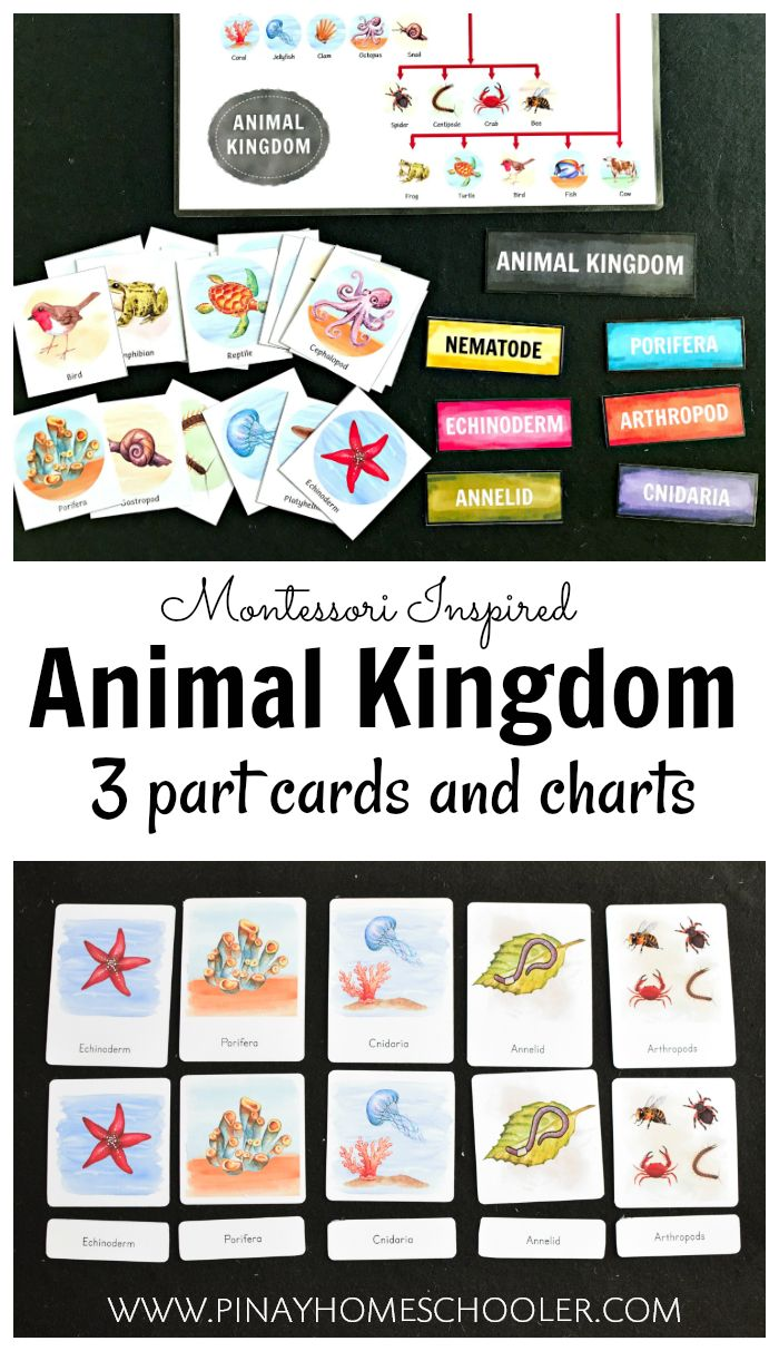 Learning materials on the Animal Kingdom (3 part cards and charts) #elementary #homeschool #learningmaterials #printables #science #biology