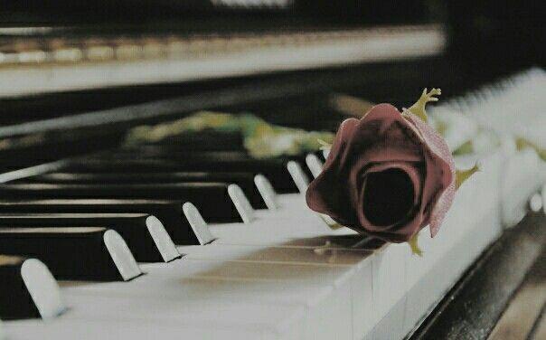 Roses http://www.instagram.com/chrtjhw/