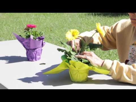 How to Promote New Buds on Gerbera Daisies : Gerbera Plant Care - YouTube