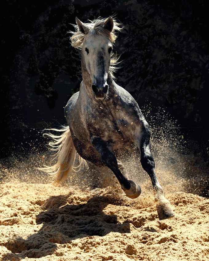 The Horse Reflects Both Wild Forces And Beauty Of Nature...It's As If We 're Almost   Worthy Of A God's Gift !...  http://snk.to/1RQd