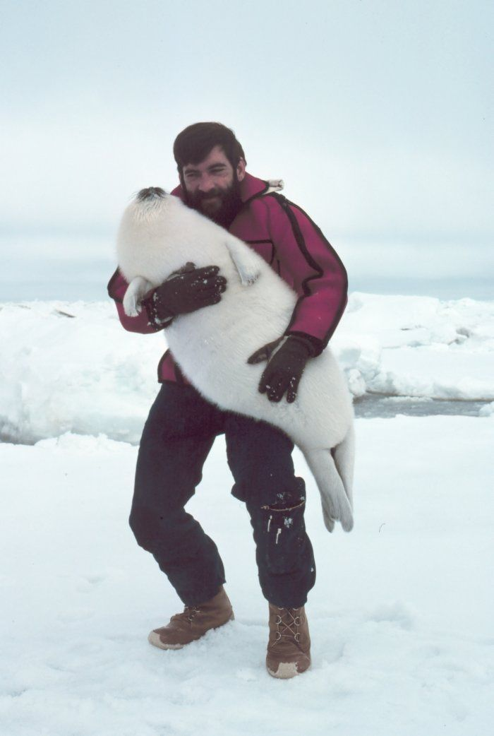 This gentleman Budd Christman sure had a difficult job cuddling cute Arctic animals. NOAA Photo Library Image - anim0237 - also check out http://www.joshparsons.net/bc/