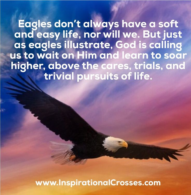 """Eagles don't always have a soft and easy life, nor will we. But just as eagles illustrate, God is calling us to wait on Him and learn to soar higher, above the cares, trials, and trivial pursuits of life.   """"Rejoicing in hope, patient in tribulation, continuing steadfastly in prayer."""" Romans 12:12   These things I have spoken to you, that in Me you may have peace. In the world you will have tribulation; but be of good cheer, I have overcome the world. John 16:33"""