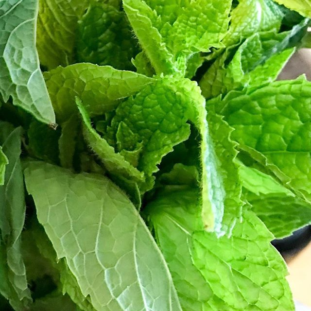 Who else loves mint in EVERYTHING for summer?  Super cooling and refreshing in smoothies, salads, kombucha, teas, pudding, sauces!  What's your fave way to use #mint? . . .    #antimicrobial #vitaminc #herbs #salad #summerlove #summeringredients #greensmoothie #mintsauce #loveyourfood #eattherainbow #familylove #moregreens #makelovingyourselfapassion #wholefoods #nourishus #letfoodbethymedicine #colouryourlife #colouryourfood #greenpower #lovegreens #plantbaseddiet #eatinghealthy #gardenlife