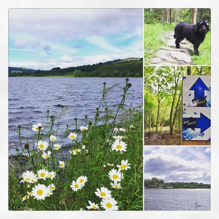 We had a jaunt round the Loch and on the #mbt trails this morning. Boys were at a sailing course such a great outdoor resource. So much to do at #lochoremeadowscountrypark with Mina ignoring the swans successfully !  #sailing #kayaking #fishing #horseriding #golf #dogwalk #dogfriendly #geocaching #playpark #windsurfing  #mountainbiking