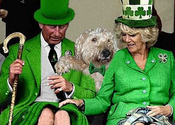 My dog on St Patrick's Day.
