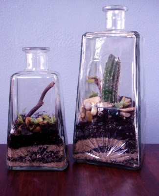 tequila bottle terrarium