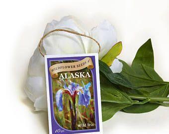 favoriscono di seme selvatico pacchetti-semi semi di pacchetti-matrimonio pacchetti-purple iris-alaska fiori di campo-fiore semi-Matrimonio Bomboniere-viola fiori selvatici-semi