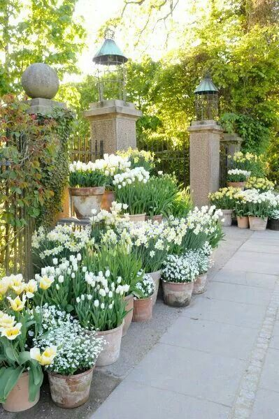 Spring white containers with bulbs. Beautiful and perfect for those with a smaller patio only garden