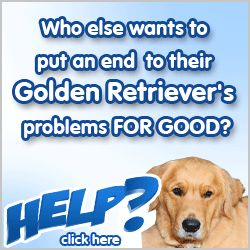 Stop Golden Retriever Jumping | Golden Retrievers Training