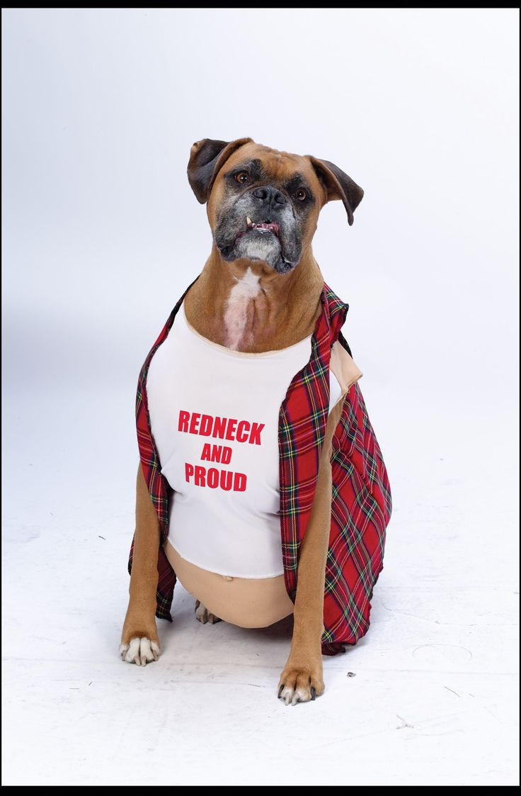 Big Dog Redneck Pet Costume---The Top Pet Costumes for #Halloween http://poshonabudget.com/2014/09/the-top-pet-costumes-for-halloween.html via @poshonabudget