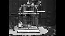 Silent animal comedy A Little Hero (1913) directed by George Nichols for Keystone Studios. A dog saves a parakeet from a cat. Running time: 04:32.
