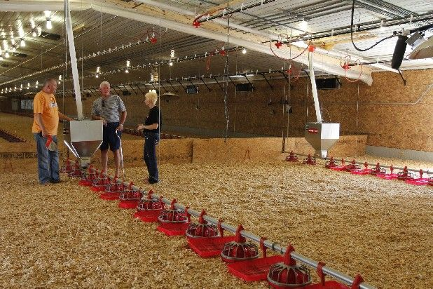 commercial poultry house pictures   new features in a state-of-the-art broiler house during an open house ...