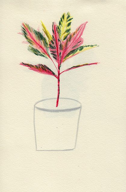 Pink Plant - Lizzy Stewart I like the contrast of colored leaves to the undone, sketched flower pot.