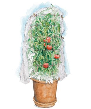 Growing Tomatoes in ContainersGardens Ideas, Growing Tomatoes In Pots, Green Thumb, Articles Www Vegetable Gars, Gardens Articles, Florida Fine, Nets Plants, Pots Mixed, Fine Gardens