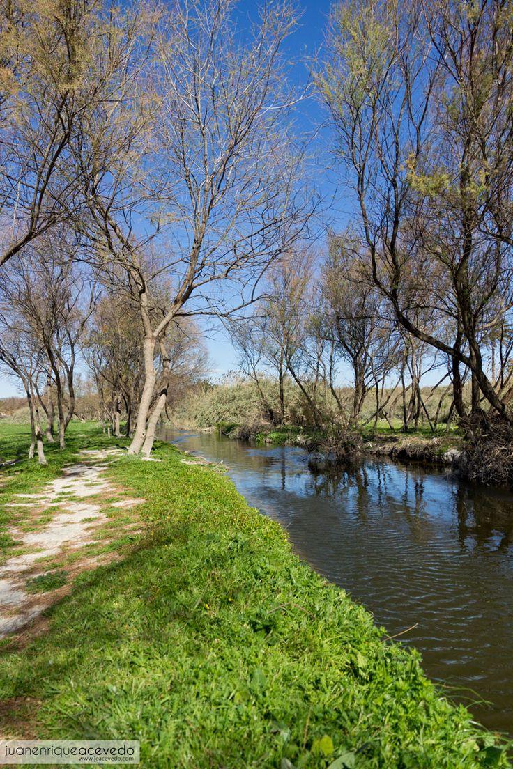 """Tarayal en el río Vinalopó (bosquete de """"tamarits"""" en la pedanía ilicitana de El Derramador)."""