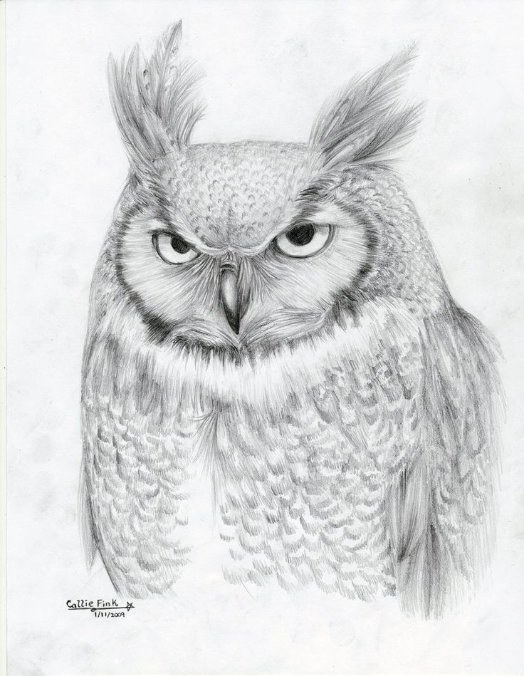102 Best Owl Sketches Images On Pinterest Owls Animal