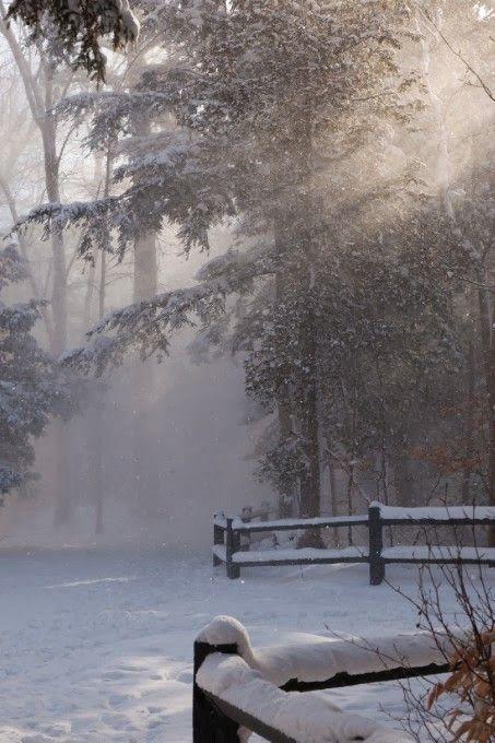 Light through the snowy trees.