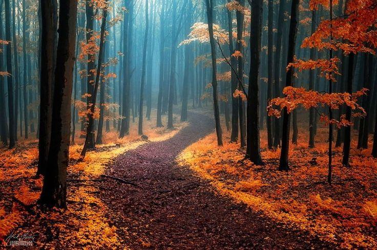Alle prime luci dell'alba oppure al tramonto, con gli ultimi raggi del sole - i più bassi - che filtrano ancora tra i rami. E' l'atmosfera magica restituita da queste immagini, che spaziano dai Carpazi alla Foresta Nera, per regalare una passeggiata nel bosco fiabesca, sulle orme di Pollicino