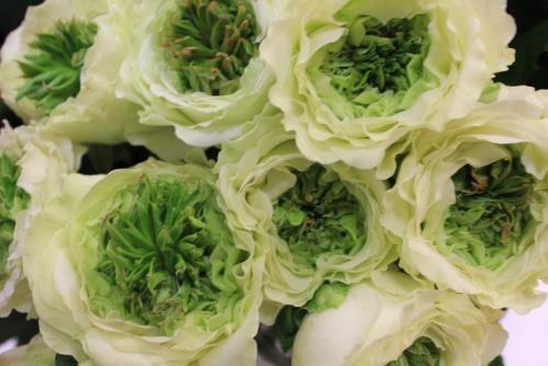 Green eyed rose