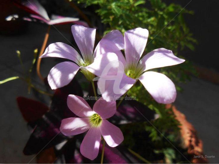 Vida em flor (Fotografia) por Janir S.Duarte
