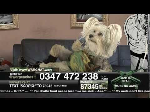 Dog Judo - Warchat #McDojo #McDojoLife www.Facebook.com/McDojoLife