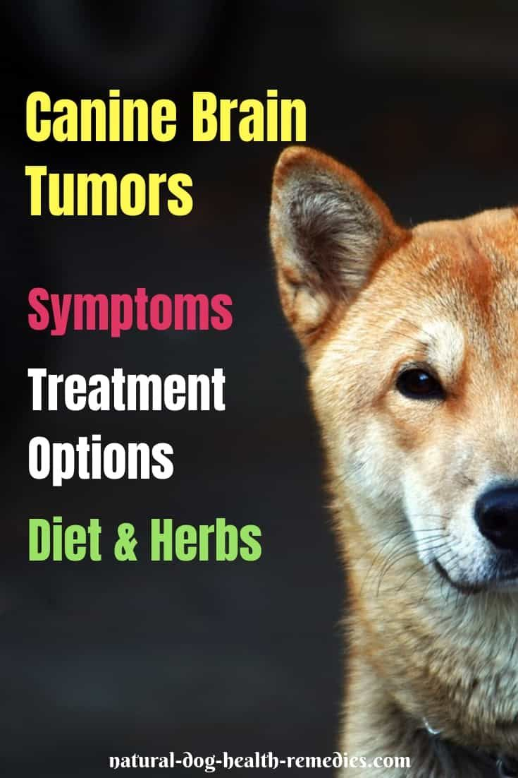 Pin On Cancer In Dogs