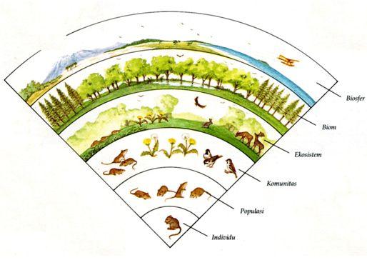 Belajar Biologi Online: Satuan-Satuan dalam Ekosistem