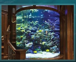 Just because aquariums are cool (of course we would also need a service to take care of it).  Acrylic Tank Manufacturing of Las Vegas, Nevada | Home of the Hit TV Show TANKED only on Animal Planet | Custom Acrylic Aquariums, Pool Panels, Water Features and Exhibits