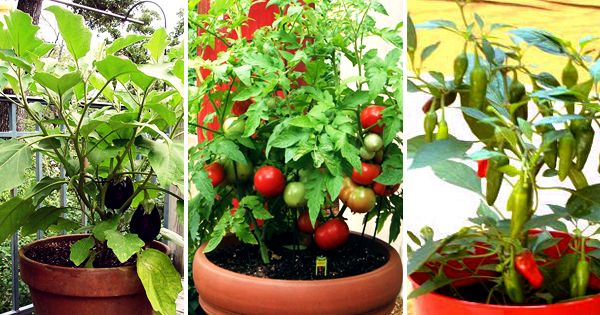 Lets Say #NoChemicalVegetables & Start Organic garden. Nurserylive provides #FreeVegetableSeeds to promote #OrganicGardening in India. Order your Free seeds now. All India Delivery.