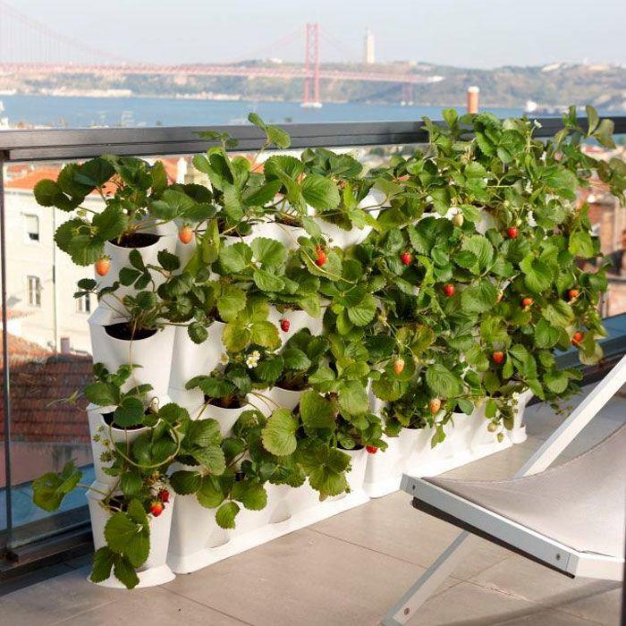 Fresas everywhere! #jardin #vertical #minigarden #fresas
