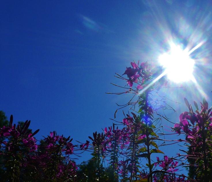summer, sun and beauty