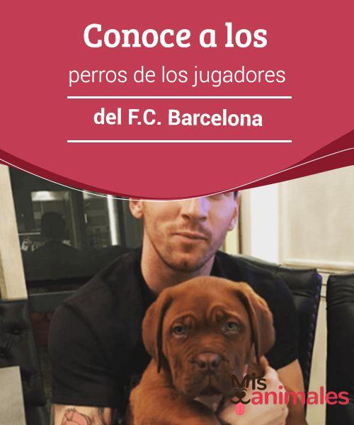 Conoce a los #perros de los jugadores del F.C. #Barcelona  En la actualidad son muchas las personas que #comparten su vida con alguna mascota. #Famosos y famosas tienen en su mente al perro, uno de los animales más populares para tener de mascota y por el que muchos optan. Los deportistas y futbolistas de élite no son una #excepción y hay muchos que han compartido en las redes sociales #imágenes de sus canes.
