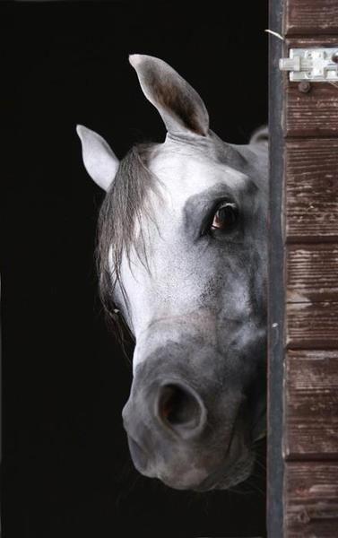 Horse / Hey good looking...