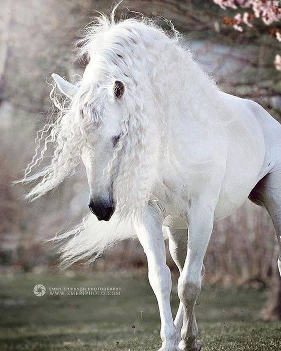 My horses in heaven don't look like this..they're even more beautiful for allowing me to be in their life the time they were here..Miss you Starfire...Rebel..Bimbo...Love me <3
