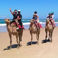 cabo activities camel rides  www.CaboHomesandVillas.com #CaboActivities