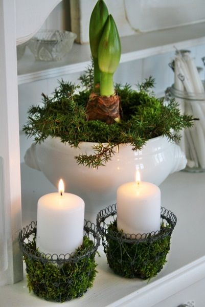 Moss covered metal candle holders; moss and bulbs in white ceramics.  Pretty pretty.