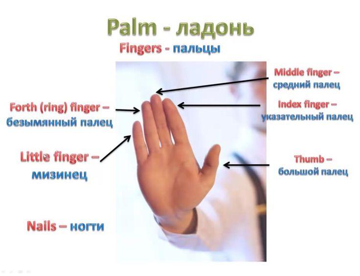 Palm- Ладонь