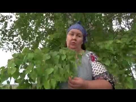 """""""Молодые"""" березовые листья. - YouTube"""